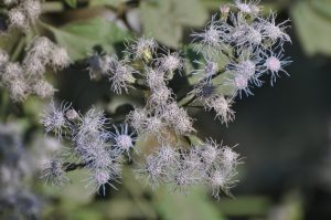 bloemen-wild